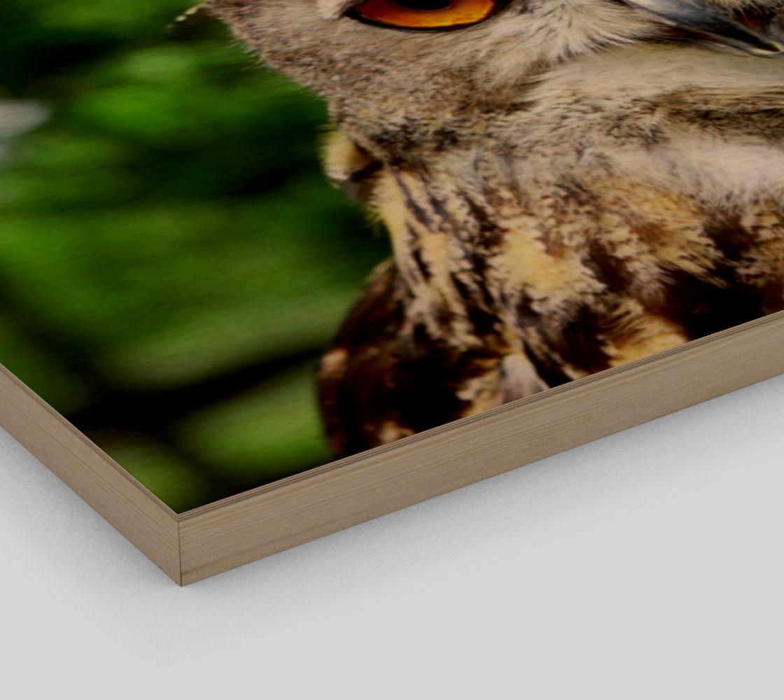 Aperçu de Owl #3