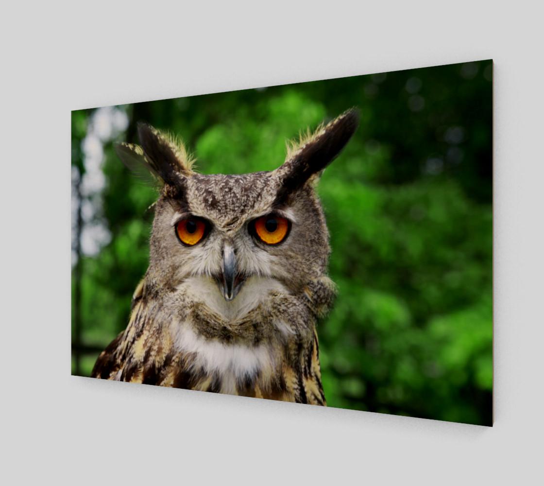 Aperçu de Owl #2