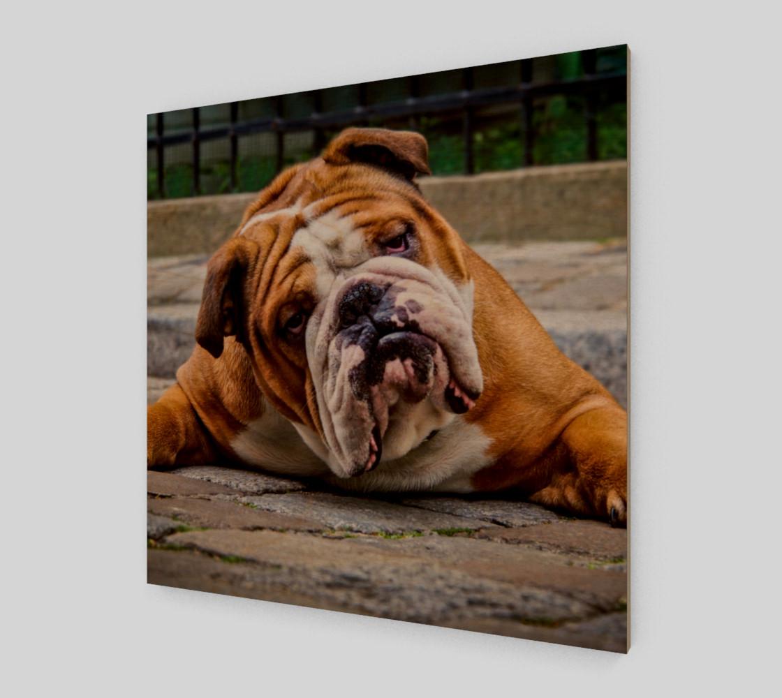 Aperçu de Chien grognon     Grumpy Dog #1