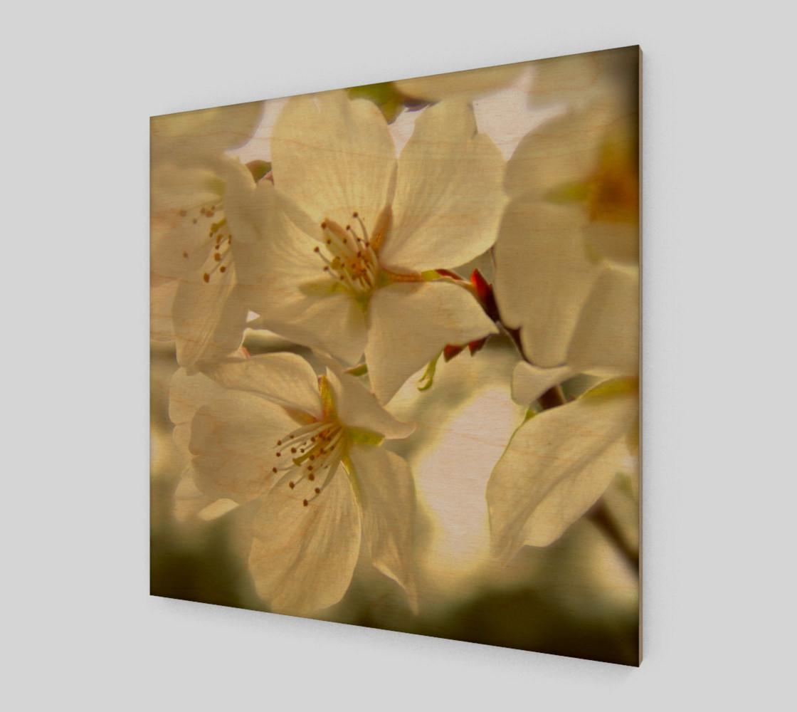 Aperçu de Cherry Blossoms #1