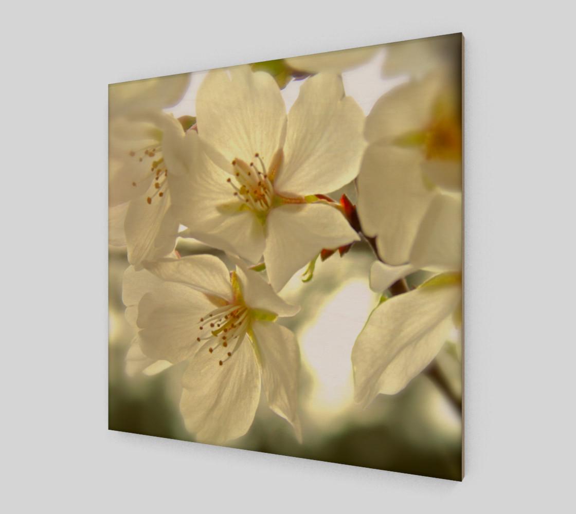 Aperçu de Cherry Blossoms #2