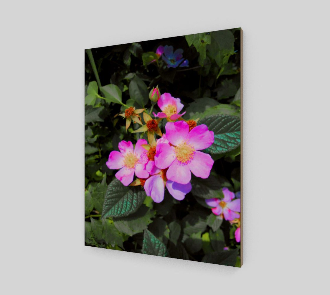 Wild Roses Photographic print by Tabz Jones preview #2