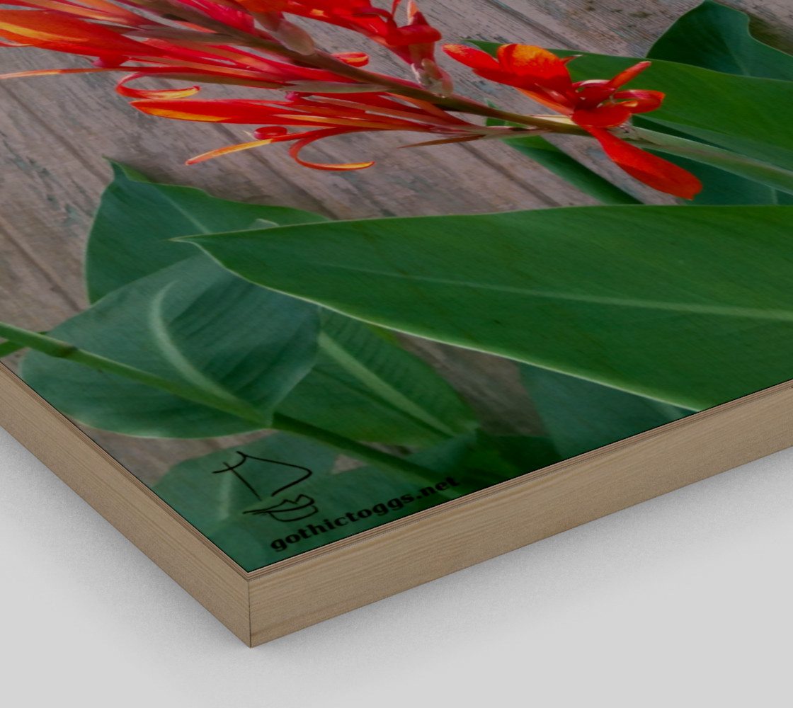 Canna Lily Photographic print by Tabz Jones preview #3