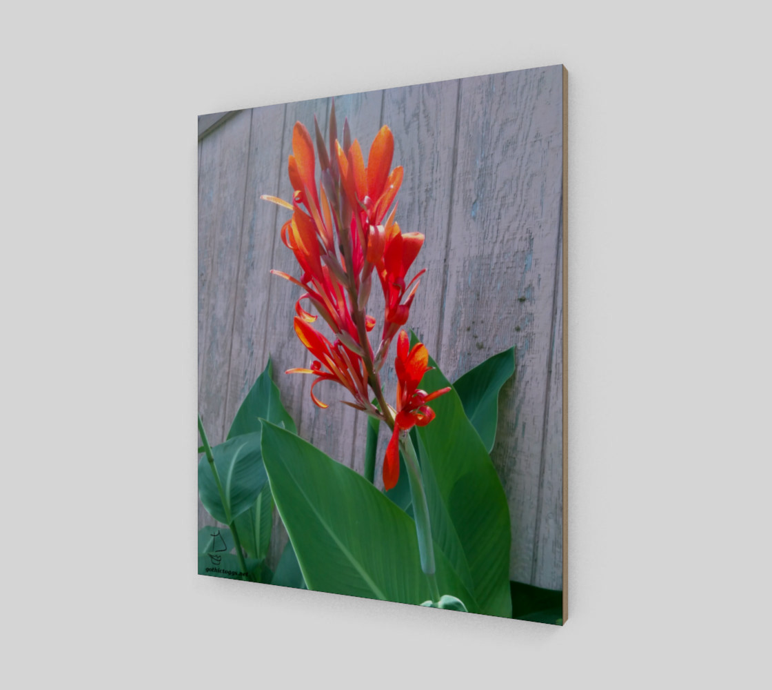 Canna Lily Photographic print by Tabz Jones preview #2