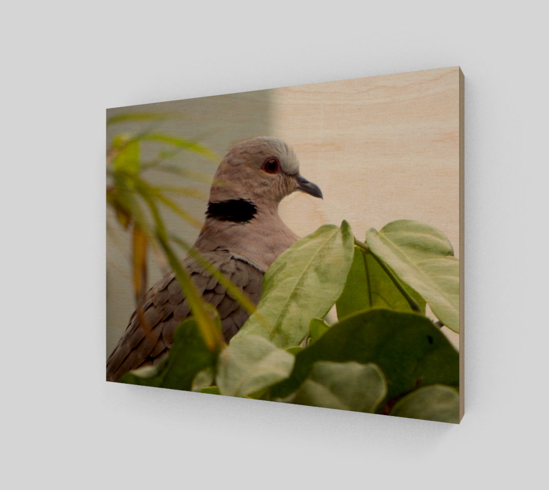 Ring-necked Dove Miniature #2