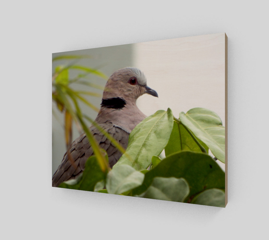 Ring-necked Dove Miniature #3