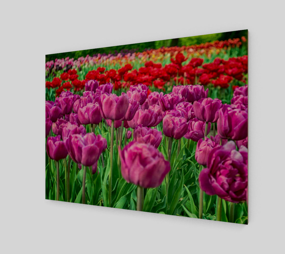 Aperçu de Tulip Field #1