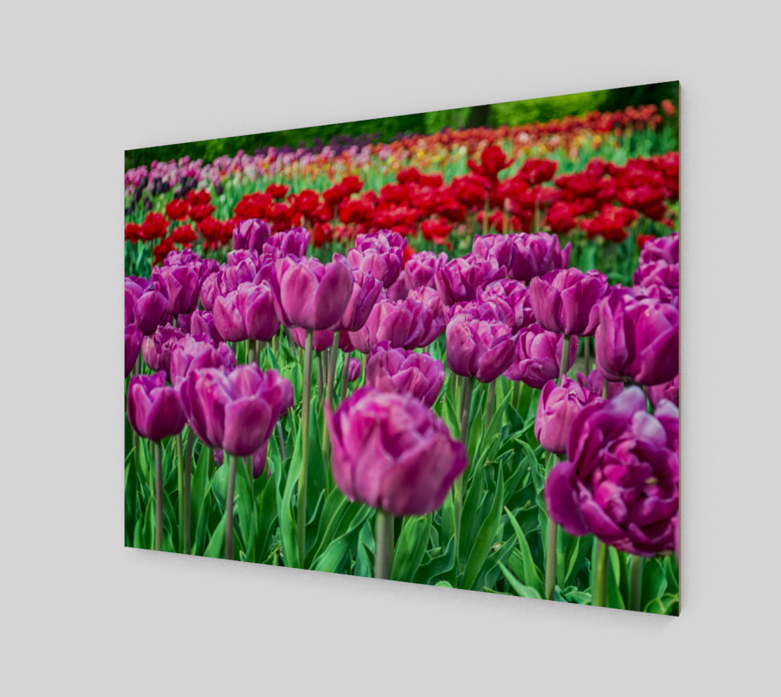 Aperçu de Tulip Field #2