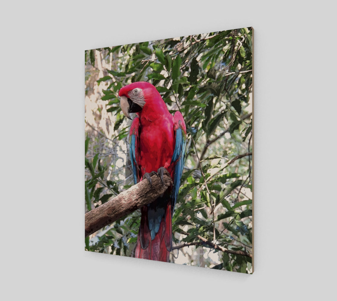 Scarlet Macaw preview #2