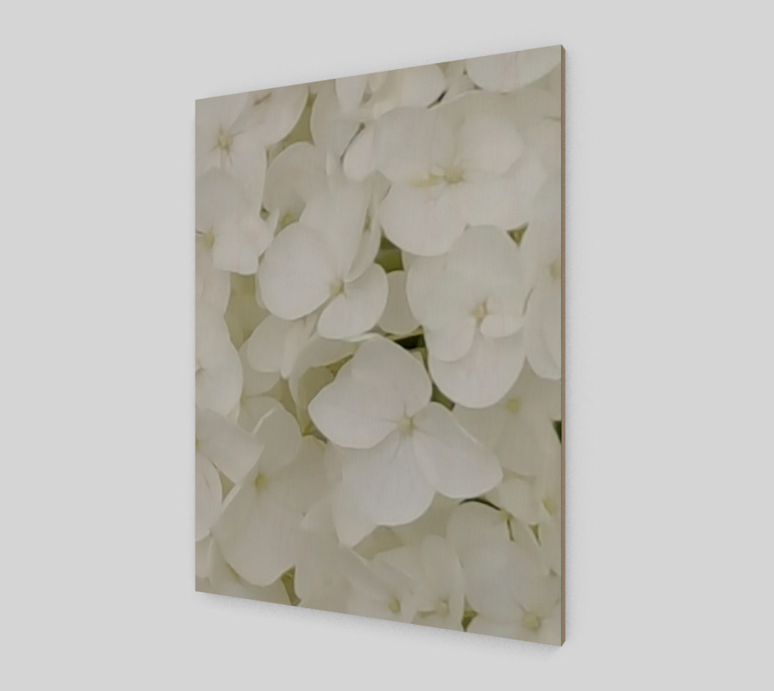Hydrangea Flowers White Blossom Floral Photography preview #2