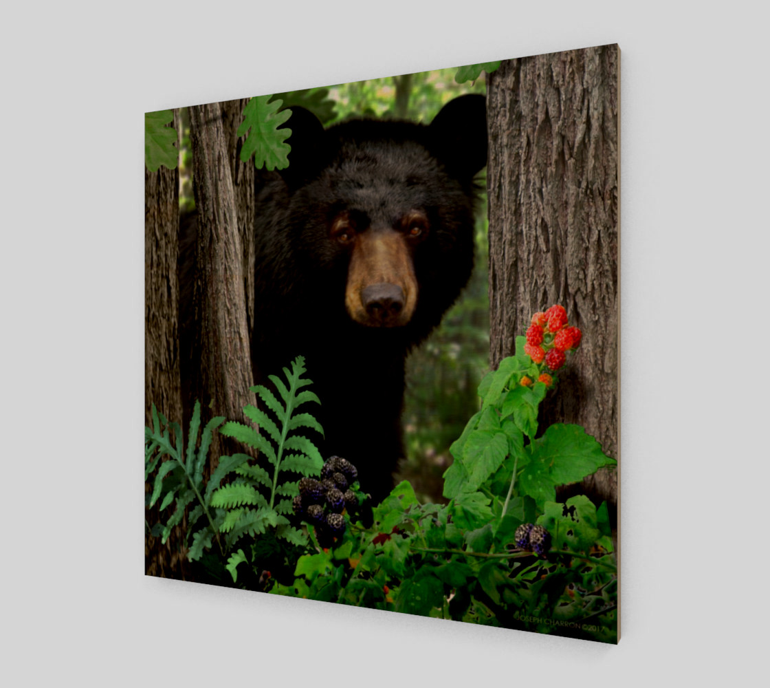 FOREST - SUMMER - BLACK BEAR 001 preview #1