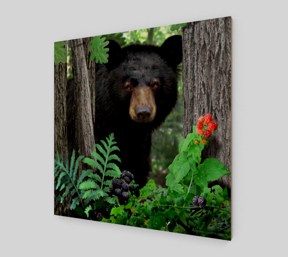 FOREST - SUMMER - BLACK BEAR 001 preview #2