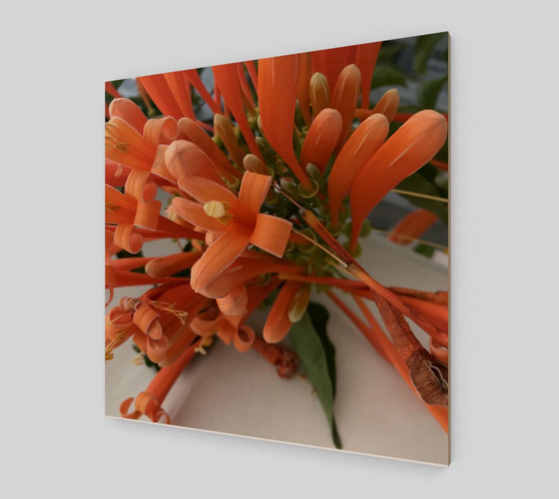 Aperçu de YMCA Orange Flower/Flor #2