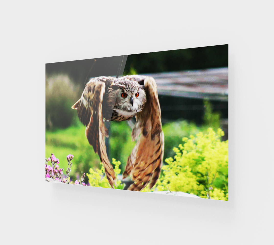 Owl In Flight Wall Art preview