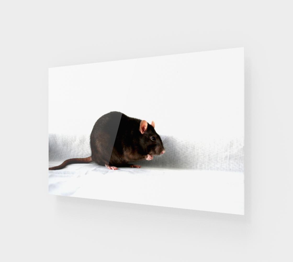 Rat Acrylic Print preview
