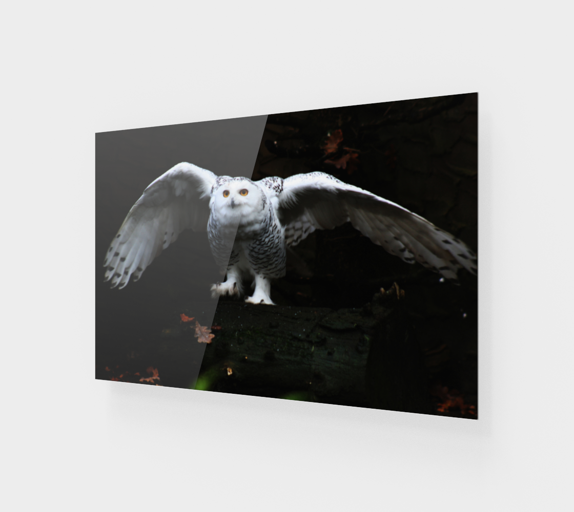 Snowy Owl With Open Wings Wood Print preview