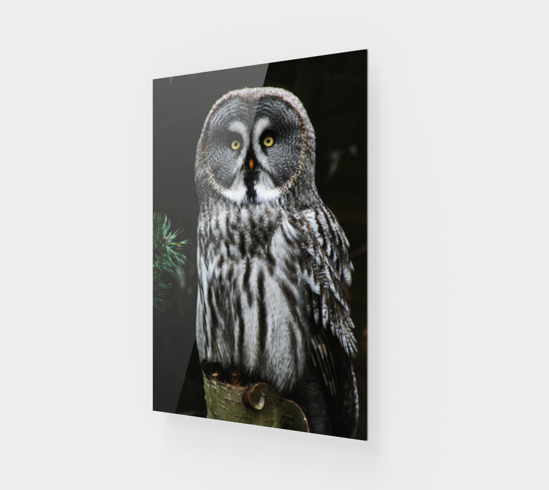 The Great Grey Owl Wood Print preview