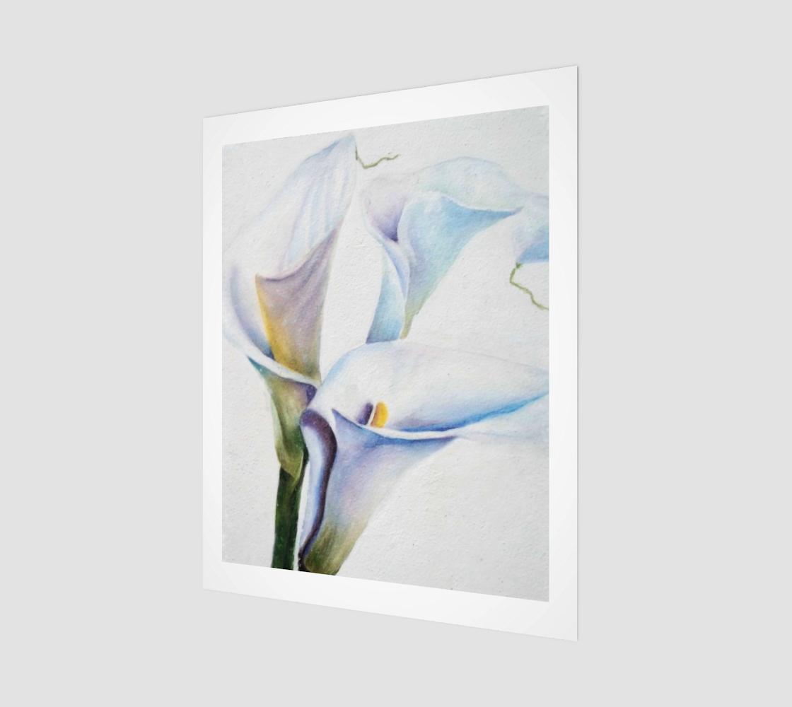 Gorgeous Calla Lilies preview