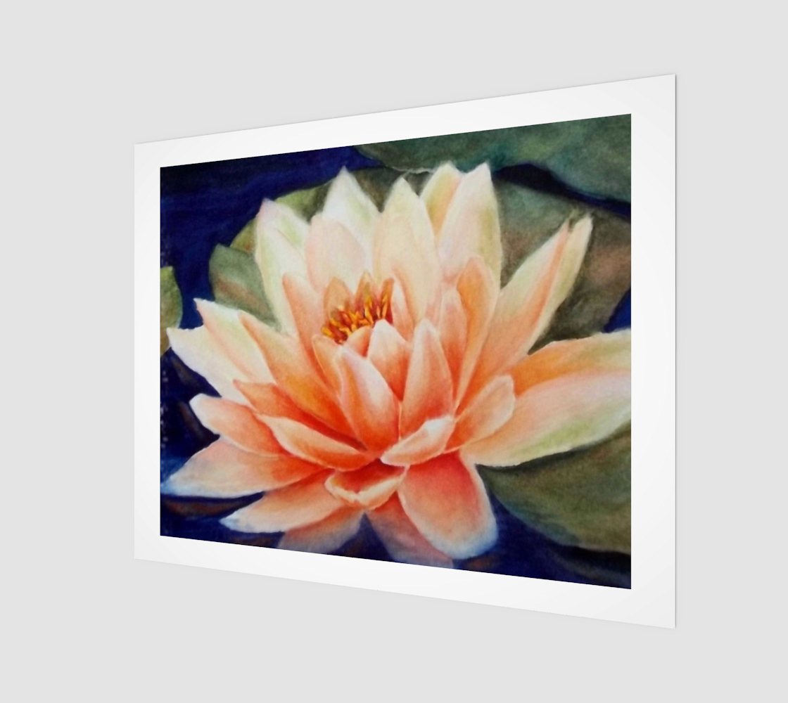 Waterlily Beauty preview