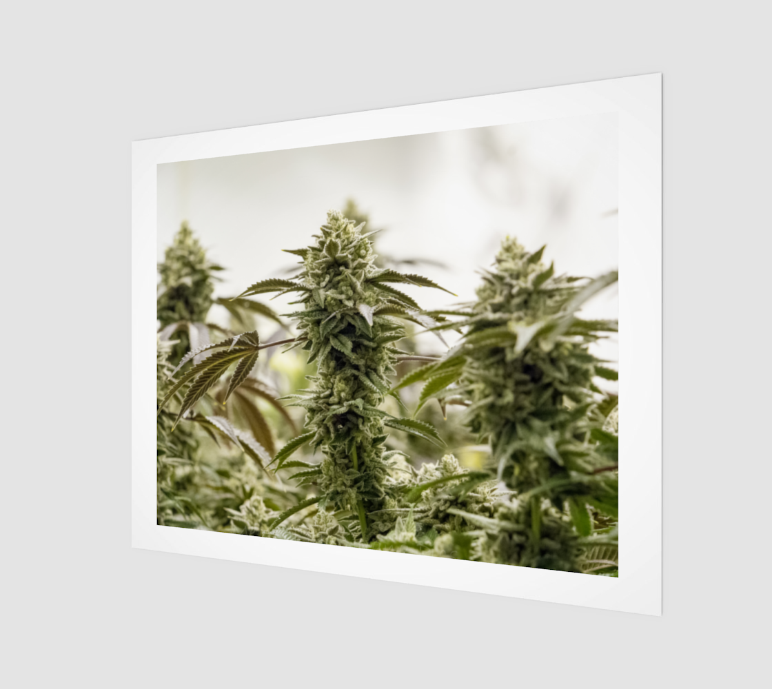 Medical Miracle Wall Art preview