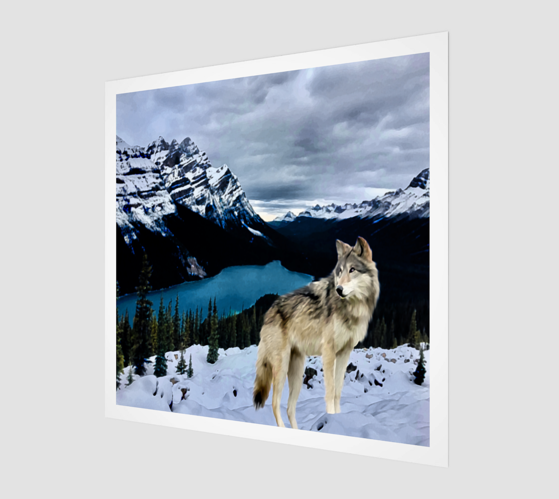 Peyto Lake Wolf aperçu
