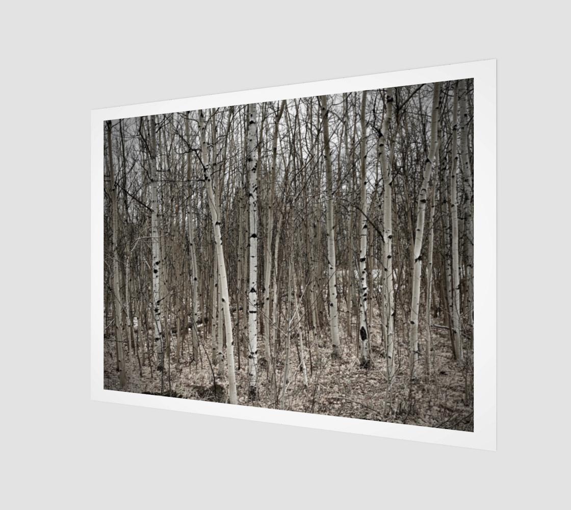 Aperçu de ASPEN TREES