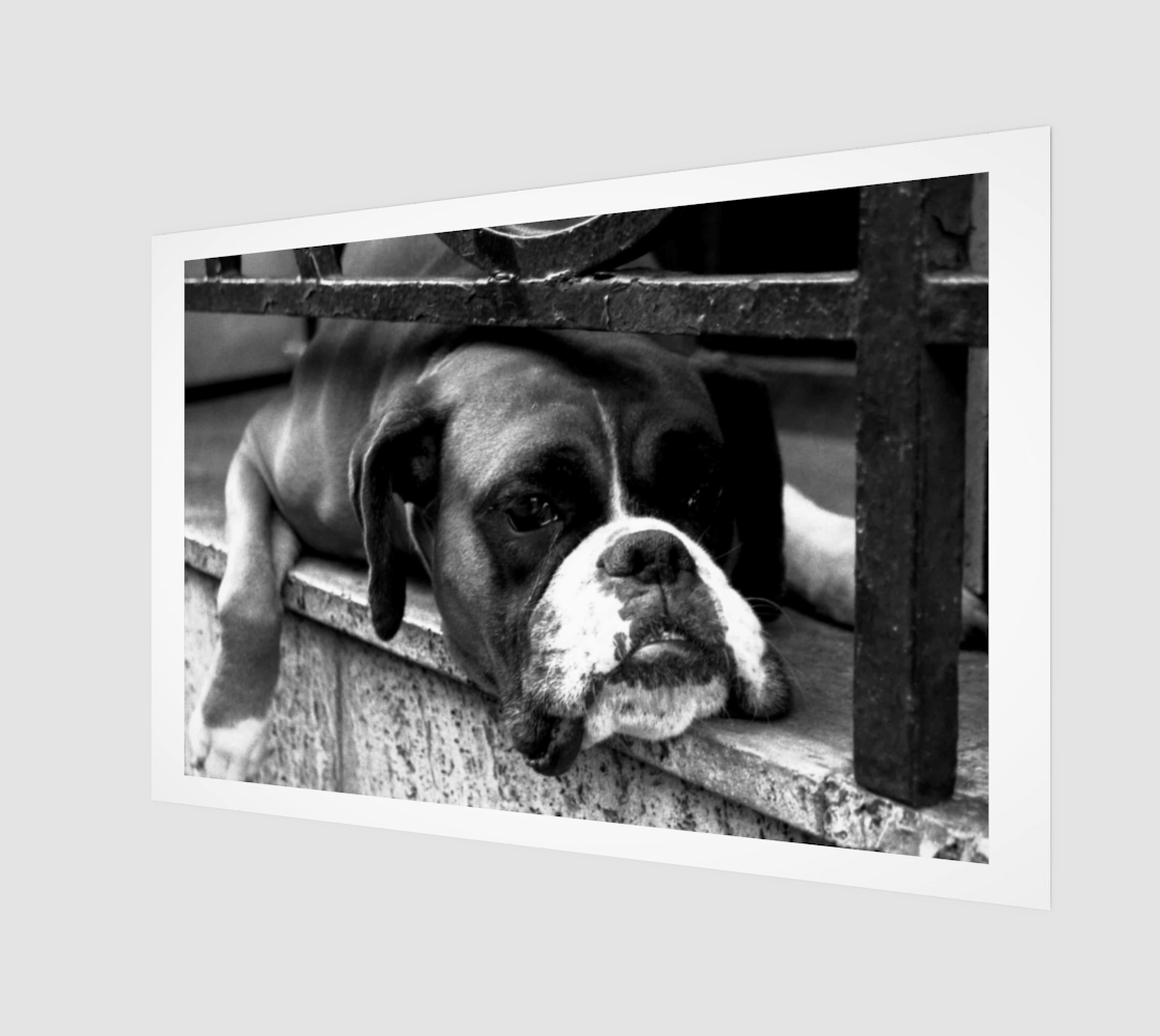 Aperçu de Boxer Dog On Windowsill Wall Art #1