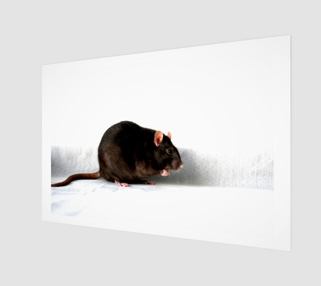 Rat Wood Print preview