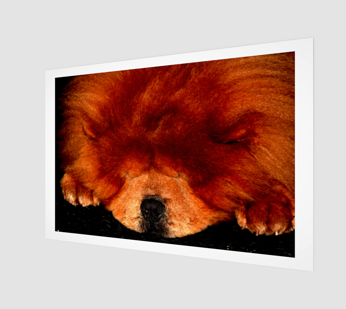 Sleeping Chow Chow Poster Print preview
