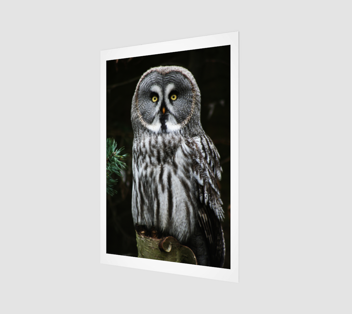 The Great Grey Owl Art Print preview