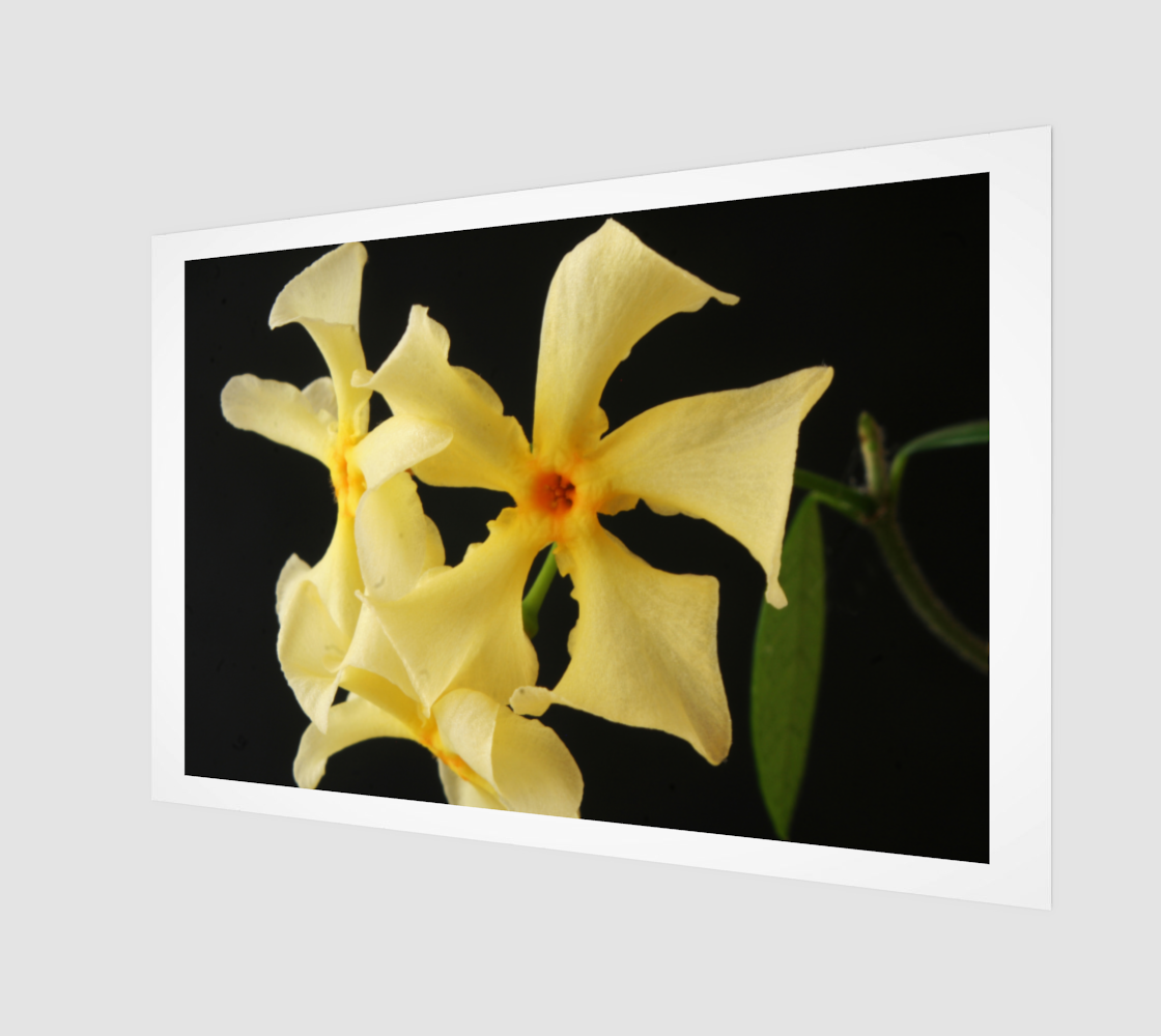 Star Jasmine Flower Wood Print preview