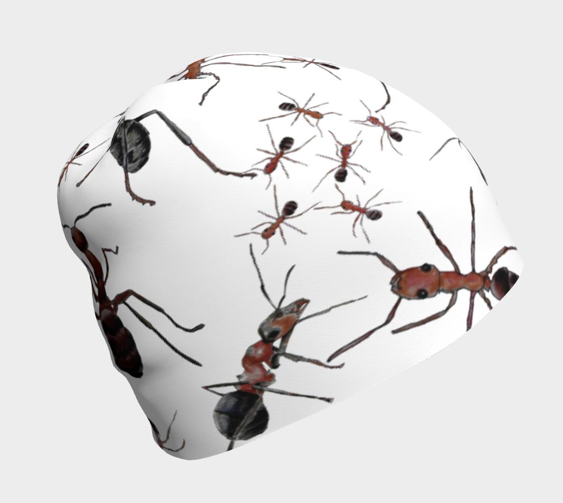 Aperçu de ants
