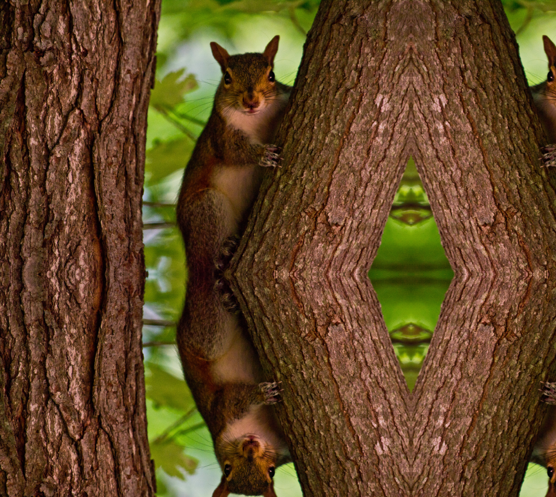 Spying Squirrel preview