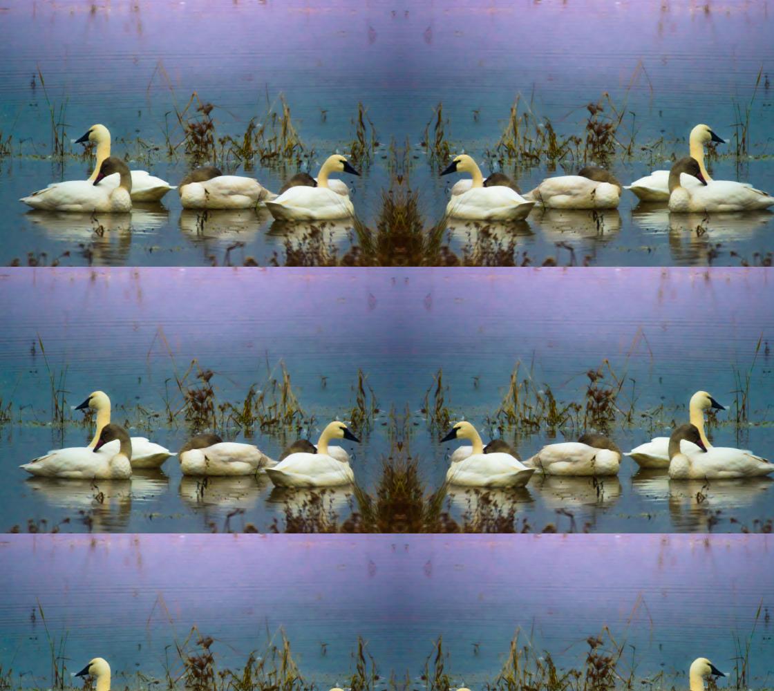 Aperçu de Tundra Swans in Purple Morning LIght