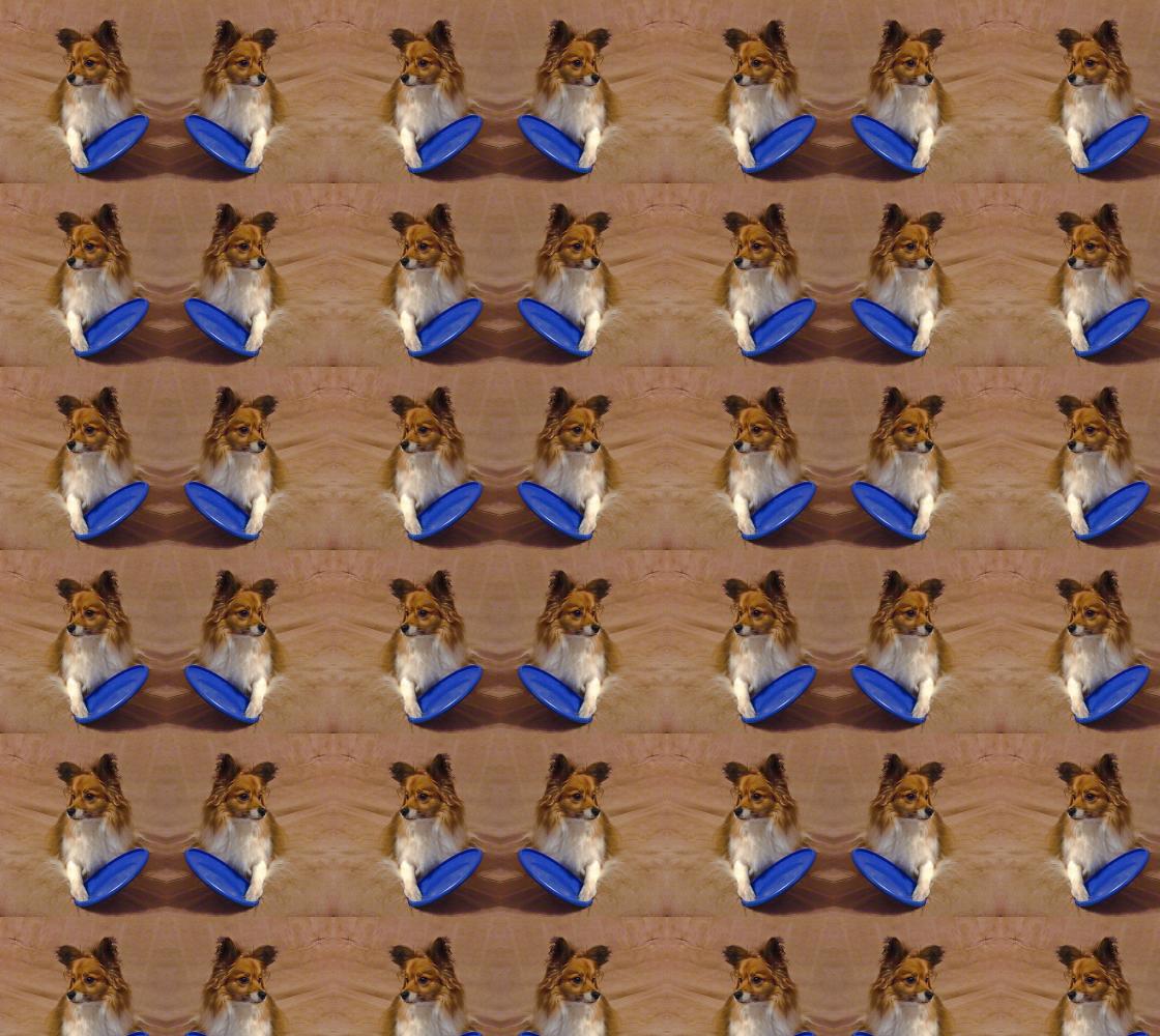 Aperçu de Pomeranian