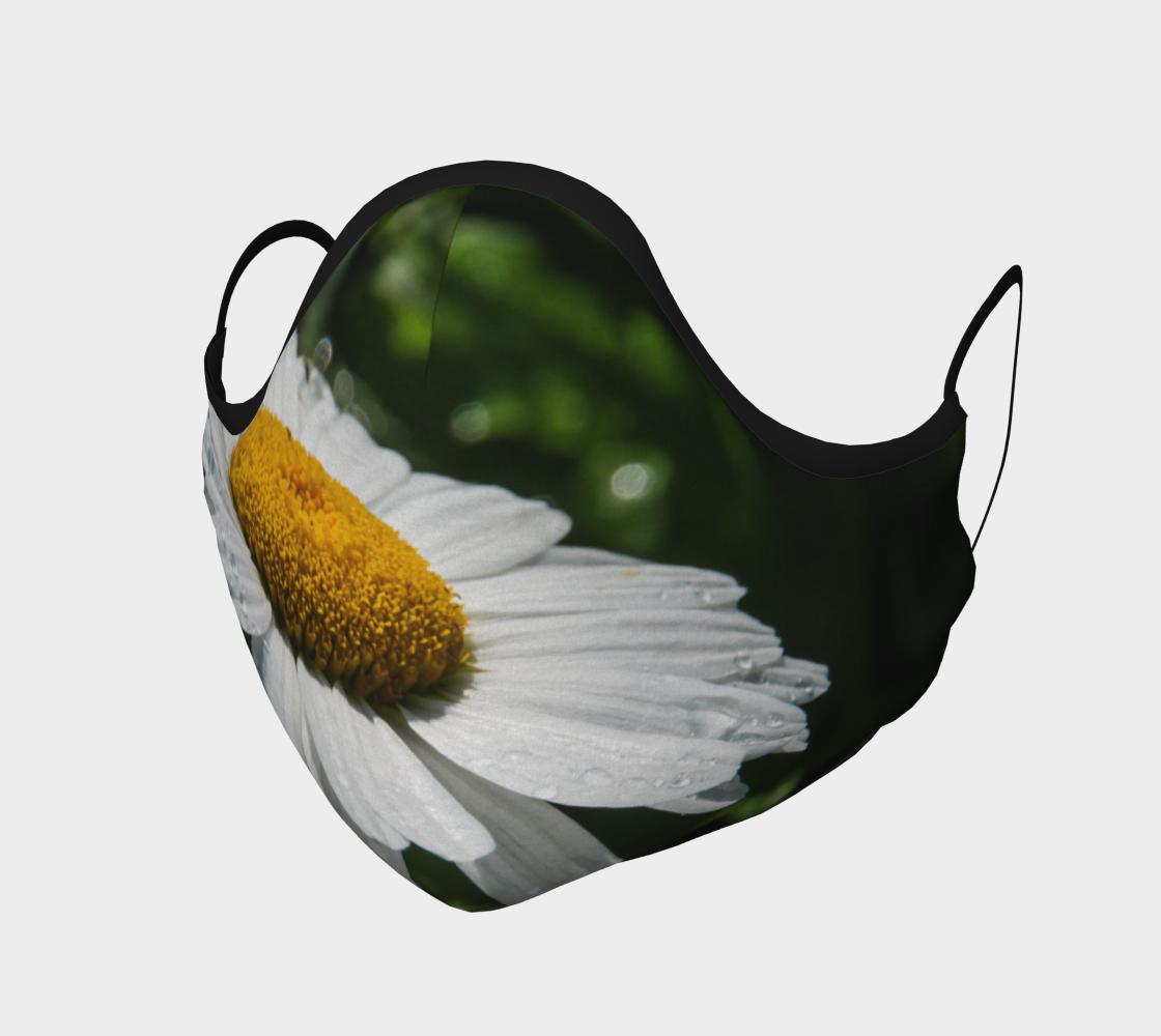 Aperçu de phographie - fleurs margueritte