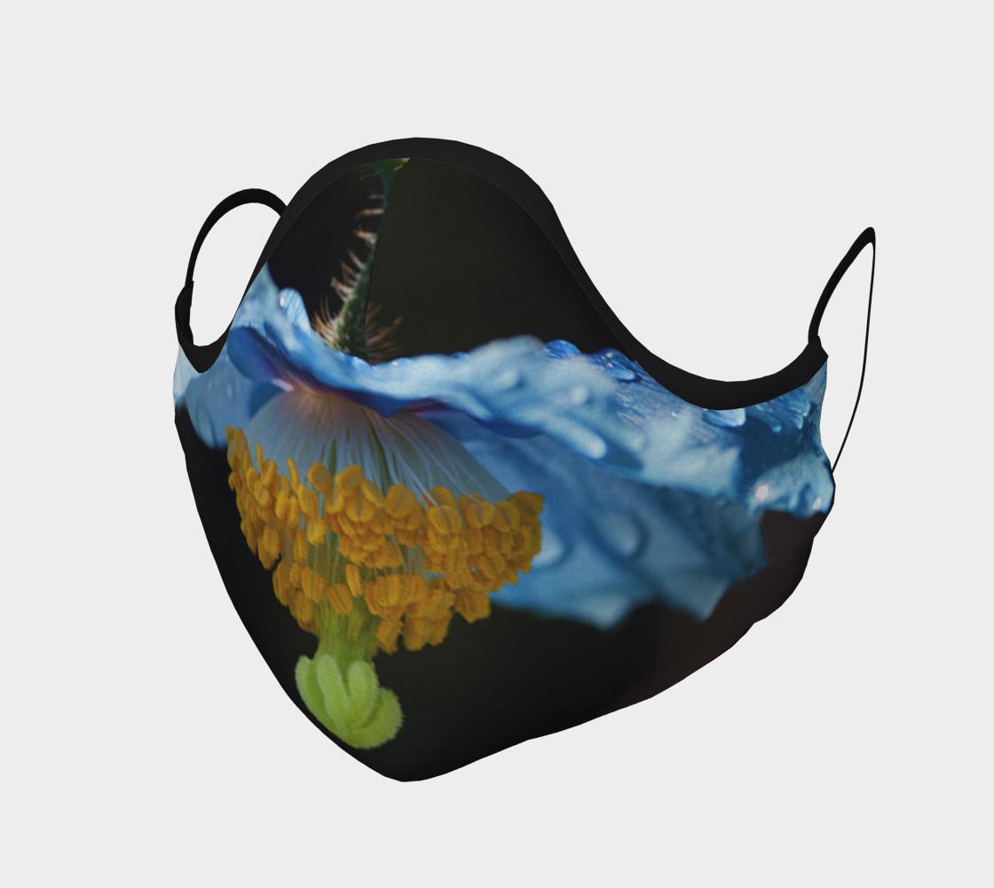 Pavot bleu  |  Blue Poppy aperçu