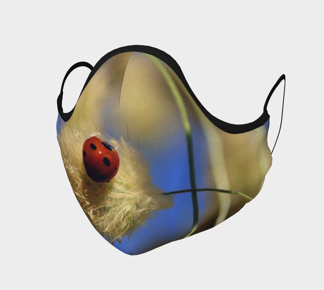 Aperçu de Coccinelle  |  Beetle