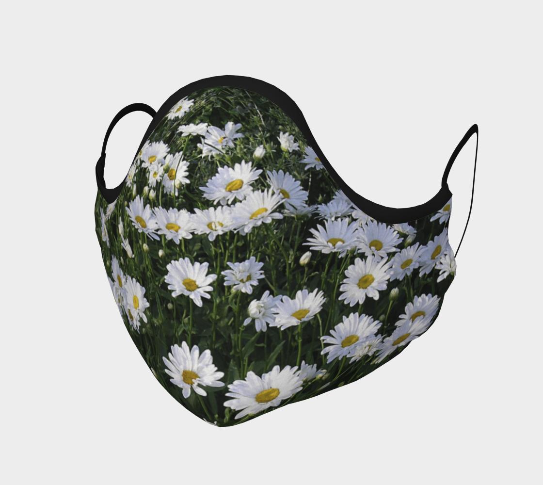 Marguerites  |  Daisies aperçu