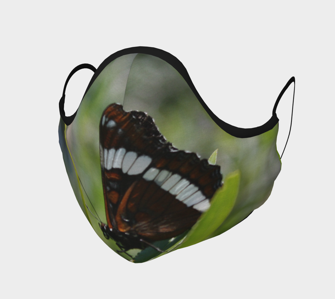 Brown Butterfly with White Stripe  preview