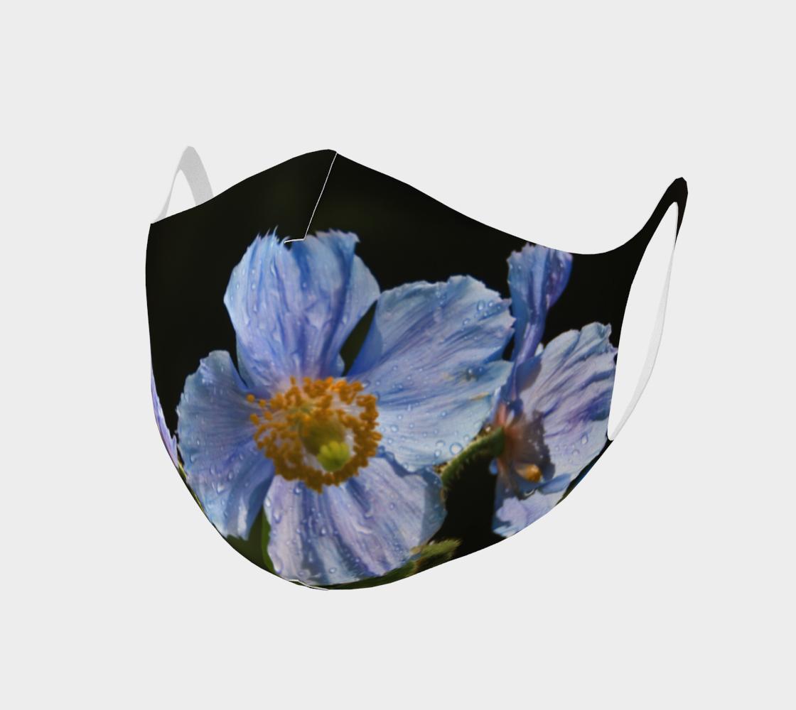 Aperçu de Pavots bleus  |  Blue Poppies