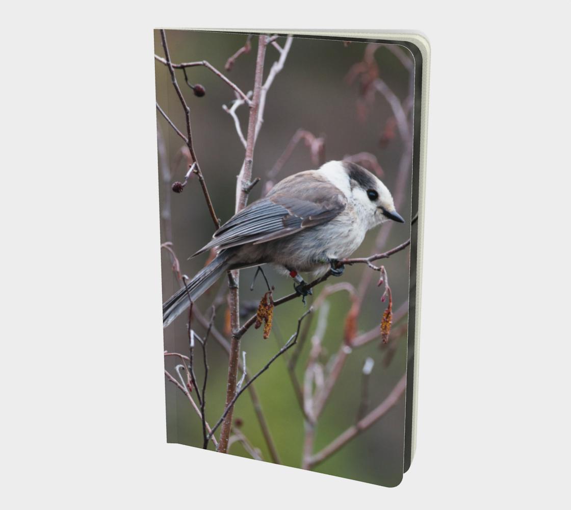 Aperçu de Canada Jay notebook