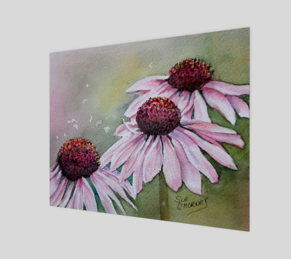 Pink Echinacea Daisies preview