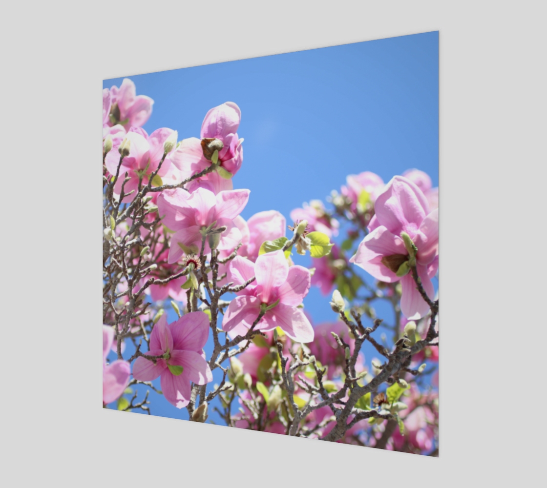 pink magnolias - canvas preview