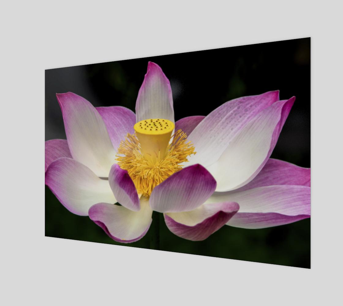 Aperçu de Fleur de lotus  |  Lotus Flower