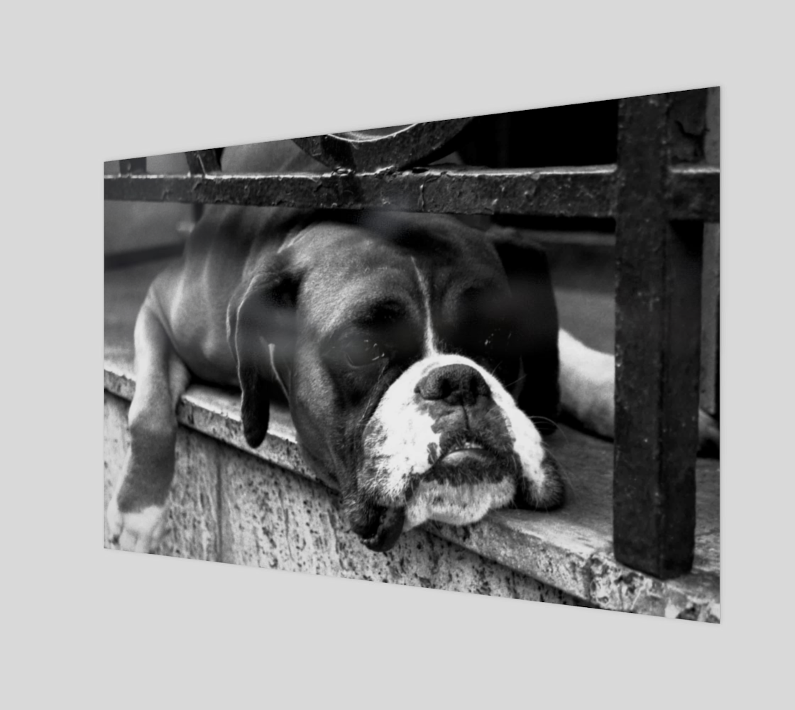 Boxer Dog On Windowsill Wall Art preview