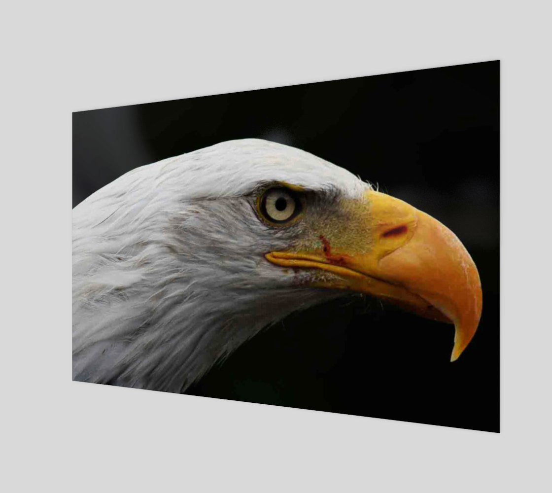 Bald Eagle Wall Art preview