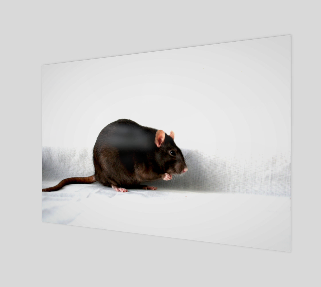 Rat Art Print preview
