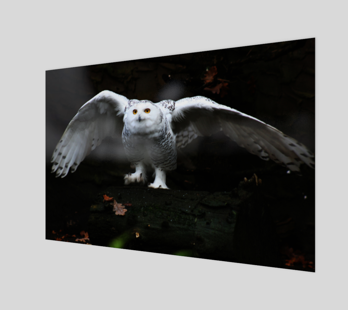 Snowy Owl With Open Wings Acrylic Print preview