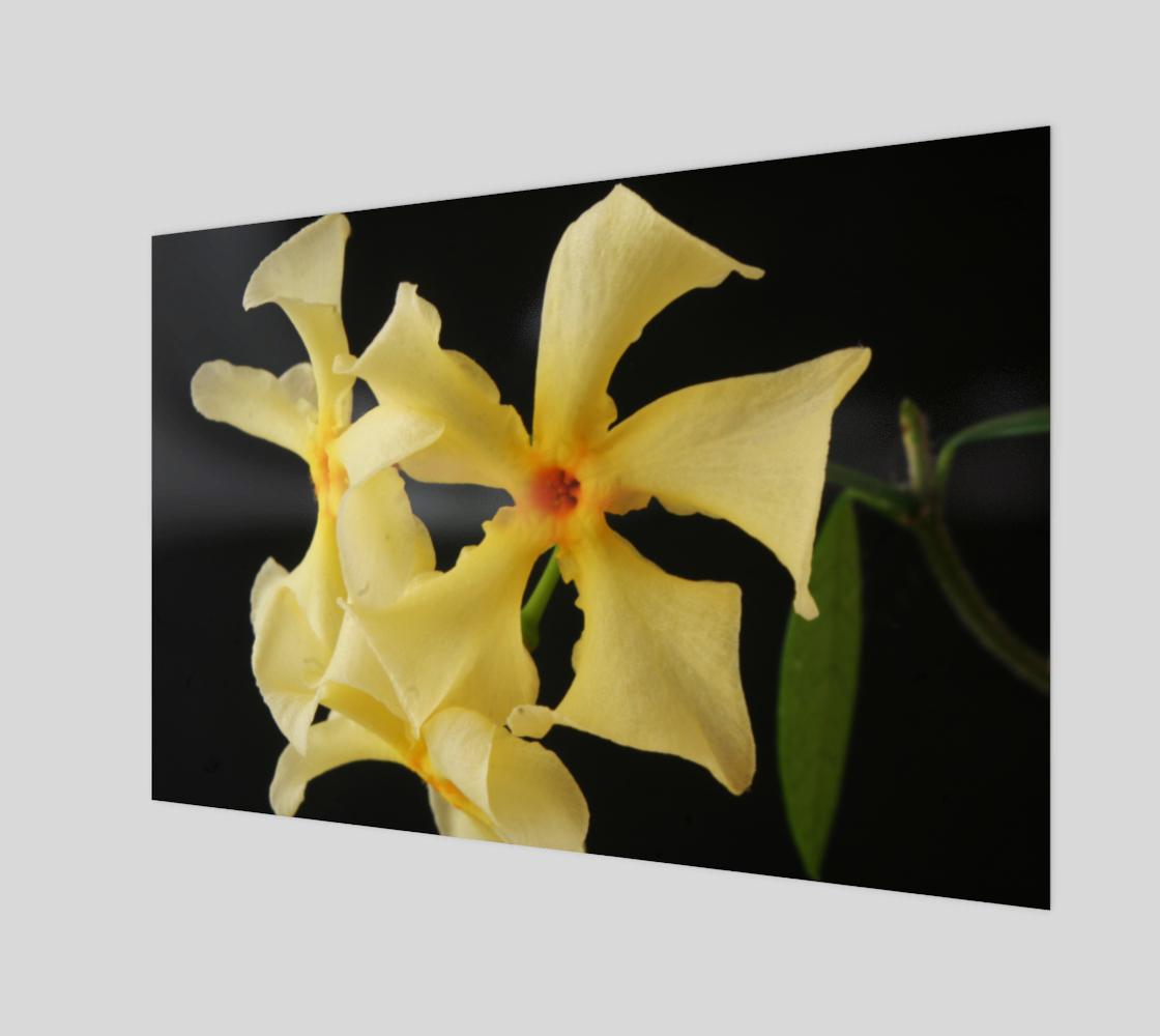 Star Jasmine Flower Art Print preview
